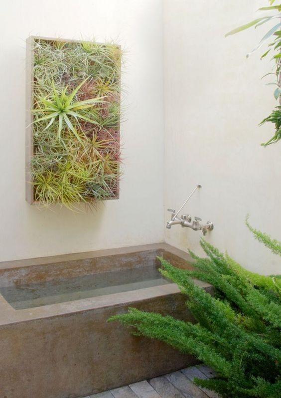 گیاهان هوازی تیلاندسیا در سرویس بهداشتی و حمام