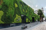 طراحی و معماری دیوار سبز