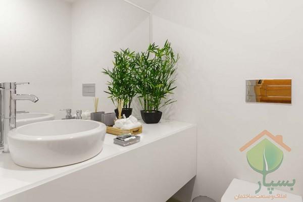 10 گیاه مناسب سرویس بهداشتی و حمام
