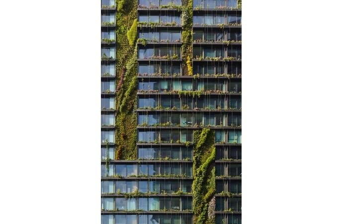طراحی سیستم دیوار سبز